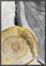 På billedet ser du variationen Golden wood 1, Illustration m. ramme fra brandet House of Sander i en størrelse H: 3 cm. B: 70 cm. L: 100 cm. i farven Multifarvet